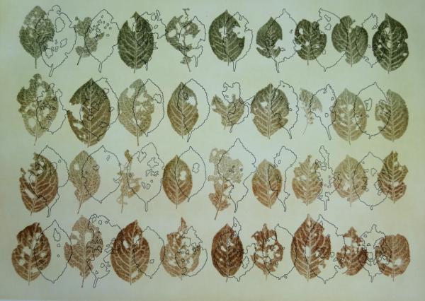 Member - Susie Turner - Leicester Print Workshop